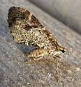 7333 – Stamnodes gibbicostata – Shiny Gray Carpet - Stamnodes gibbicostata