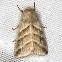 Subflexus Straw Moth - Hodges #11070 - Chloridea subflexa
