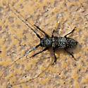 Beetle ID? - Oncideres rhodosticta