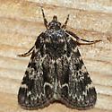 Stored Grain Moth - Aglossa caprealis