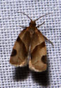 could this be a Argyrotaenia coloradana  - Clepsis peritana