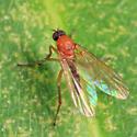 fly - Hilara