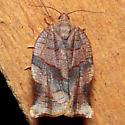 Choristoneura rosaceana - female