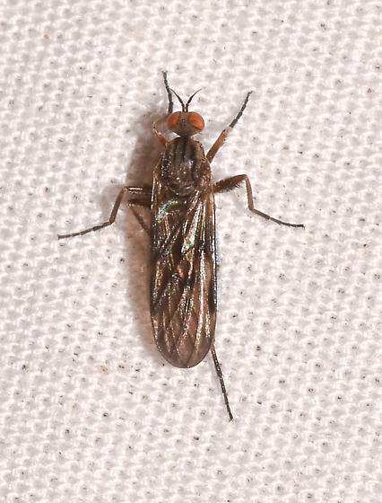 fly052720-6 - Rhamphomyia