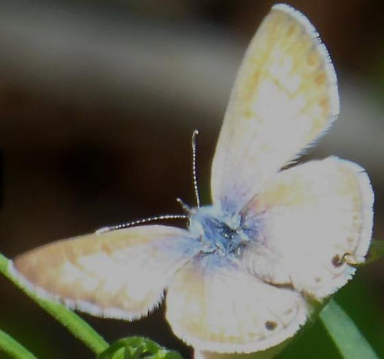 Butterfly in Bandelier National Monument