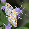 Moth - Ommatospila narcaeusalis