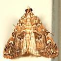 Waterlily Borer Moth - Elophila gyralis