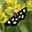 Anania funebris - White-spotted Sable - Hodges#4958a - Anania funebris