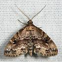 Gold-lined Melanomma - Melanomma auricinctaria