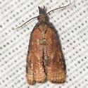 Omnivorous Platynota Moth - Hodges #3745 - Platynota rostrana