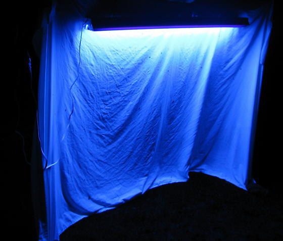 Black Light Setup - In Action