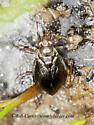 3013677 bug - Salda