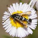 Clearwing Moth - Osminia ruficornis