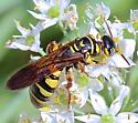 black & yellow wasp - Myzinum