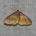 Stained Lophosis - Hodges#7181 - Lophosis labeculata