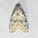 Moth ID Request