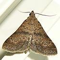 Moth69 - Bleptina caradrinalis