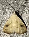 Rivula propinqualis