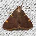 Hodges#5533 - Hypsopygia olinalis