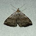 Unknown moth - Oxycilla malaca