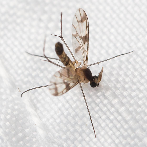 Unknown Fly from Tennessee