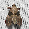 Dimorphic Tosale Moth - Hodges#5556 - Tosale oviplagalis