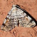 Moth 09.07.26 (1) - Idia americalis