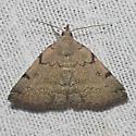 Hodges#8341 - Zanclognatha theralis