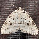 Moth - Epirrita autumnata