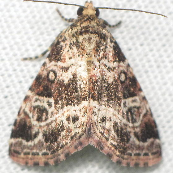 Hodges 9045.98 - N-genus n-sp