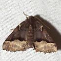Hubner's Pero Moth - Hodges #6748 - Pero ancetaria