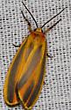 Black and orange Moth - Hypoprepia fucosa