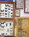 Bug Swarm_033