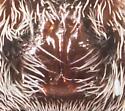 Wolf Spider ? - Pardosa moesta - female