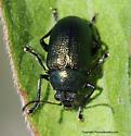 Beetle - Colaspis