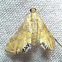 Hodges#4771 - Petrophila daemonalis