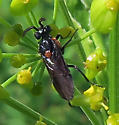 Poison Ivy Sawfly - Arge humeralis