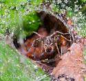 Funnel Web Weaver?