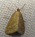 4987 Dimorphic Sitochroa Moth - Sitochroa chortalis - female