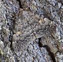 UI Moth 061510-1 BG.N - Idia aemula