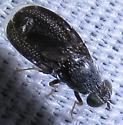 Unknown Fly - Eutreta