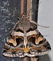 Bulia deducta - male
