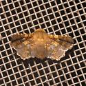 Eyed Dysodia Moth - Dysodia oculatana