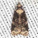 Exasperating Platynota Moth - Hodges #3743 - Platynota exasperatana