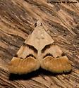 Moth - Hemeroplanis incusalis