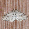 Maybe Pearsall's Carpet Moth - Venusia