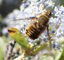 Beefly - Villa