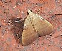 Moth to porch light - Condylolomia participalis
