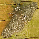 Moth - Biston betularia