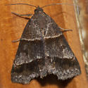 Woodland Chocolate Moth - Hodges #8760 - Argyrostrotis sylvarum
